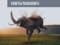 Как сделать из мухи слона
